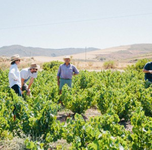 Rosa Kruger, Peter-Allan, Kosie and Graham Weerts hashing out harvesting plans.