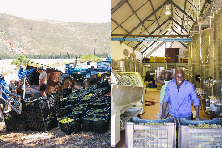 Koos Kellerman and the road-side weighing and sorting (left), and the cellar at Hemelrand (right)